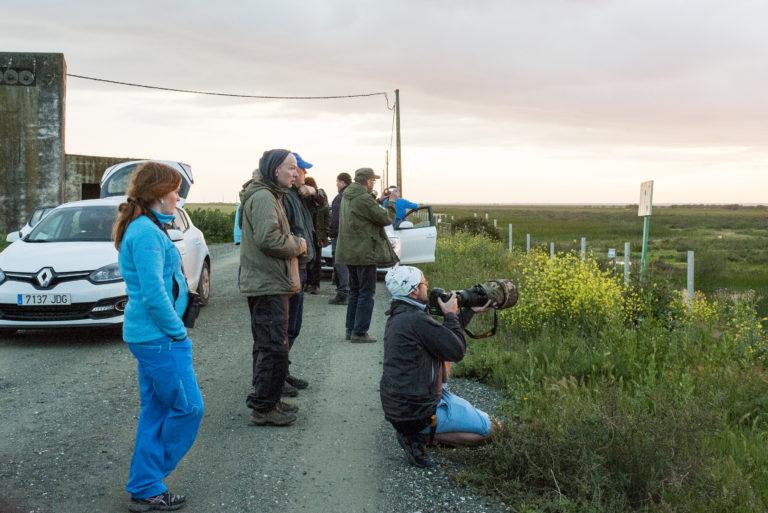 Fuglekjennskap-Spania-2015-Lena-Knutli34