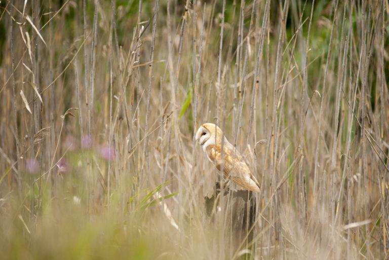 Fuglekjennskap-Spania-2015-Lena-Knutli36