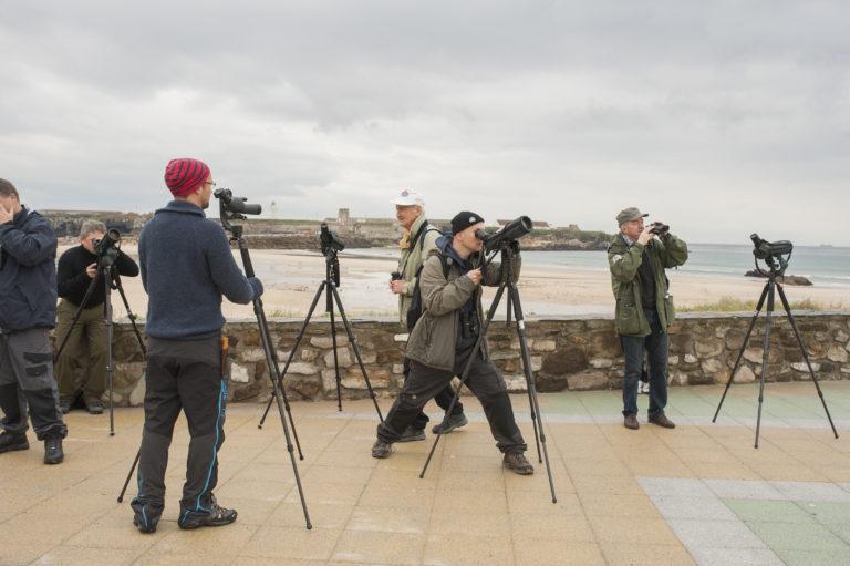 Fuglekjennskap-Spania-2015-Lena-Knutli41